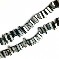 16 Inch Shell 14-20mm Tusk Beads Black